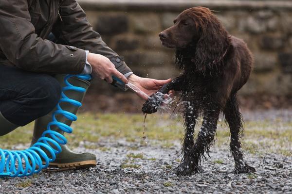 dog groomers directory
