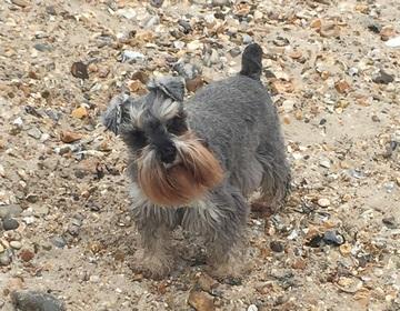 Dog Friendly Campervan Hire Midlands